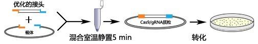 CRISPR/Cas9表达载体快速构建试剂盒使用方法