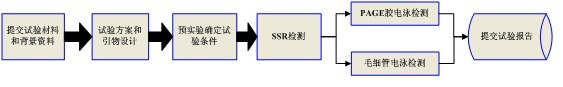 SSR/STR检测实验流程