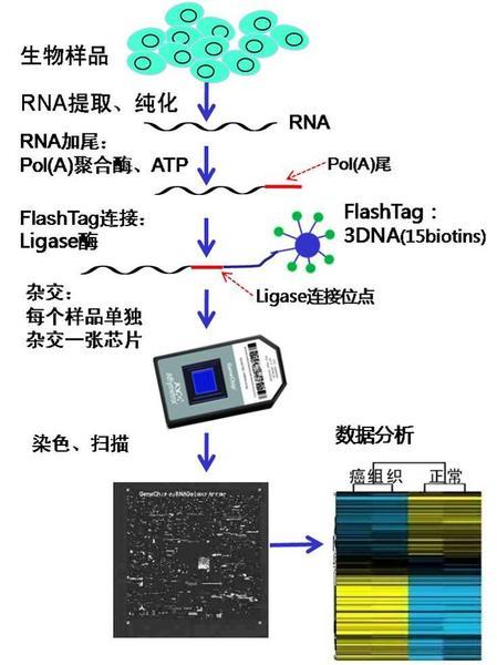 affy-miRNA 芯片实验流程