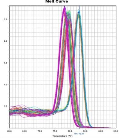 环状RNA定量PCR的溶解曲线.jpg