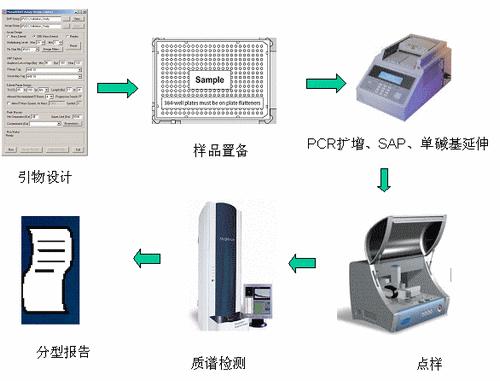 Sequenom MassARRAY技术 SNP 分型流程